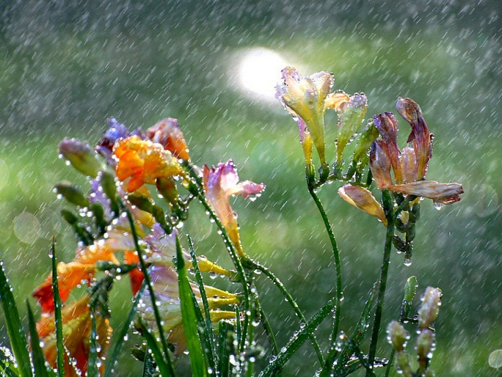 Flowers In The Rain wallpapers HD