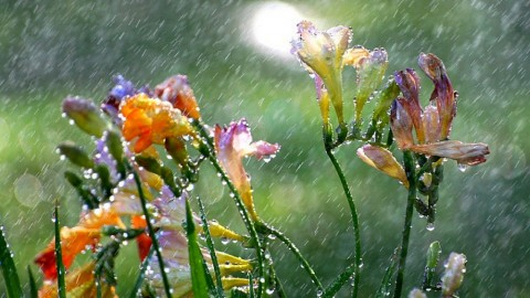 Flowers In The Rain wallpapers high quality