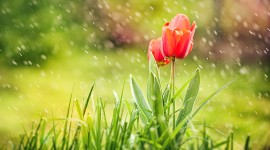 Flowers In The Rain Photo Download