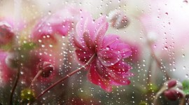 Flowers In The Rain Photo Free