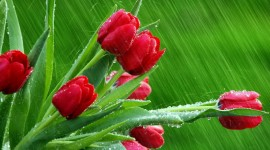 Flowers In The Rain Wallpaper Download