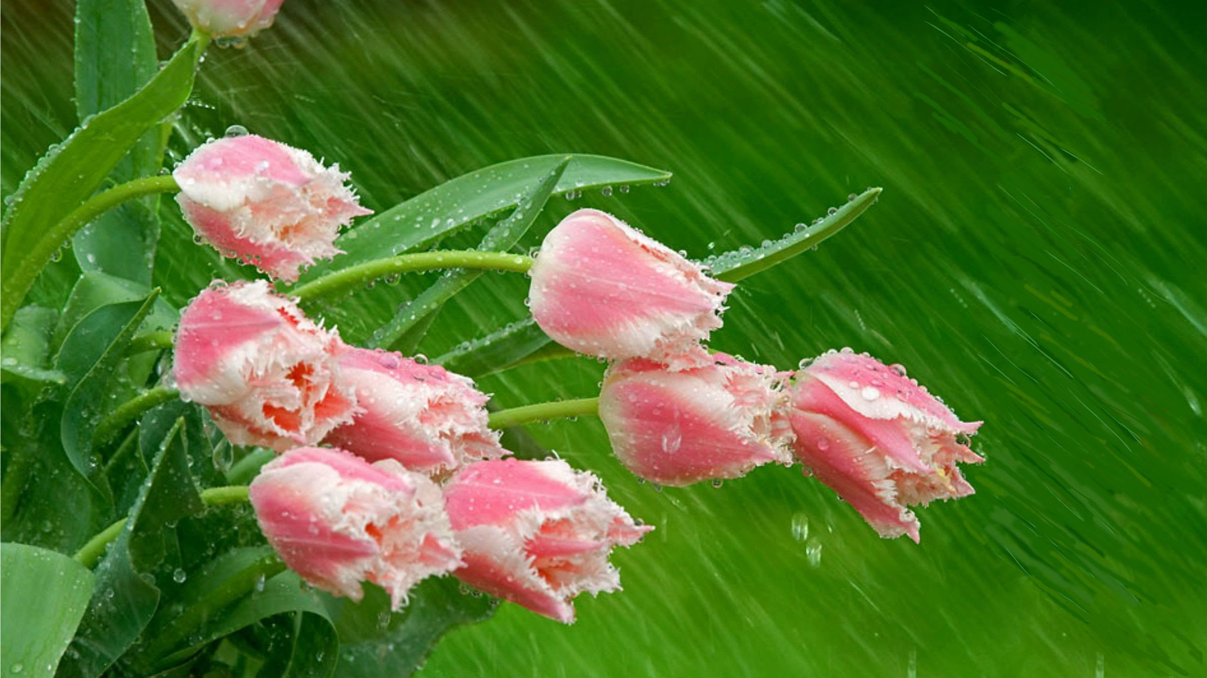 Flowers in the rain wallpapers high quality download free thecheapjerseys Gallery