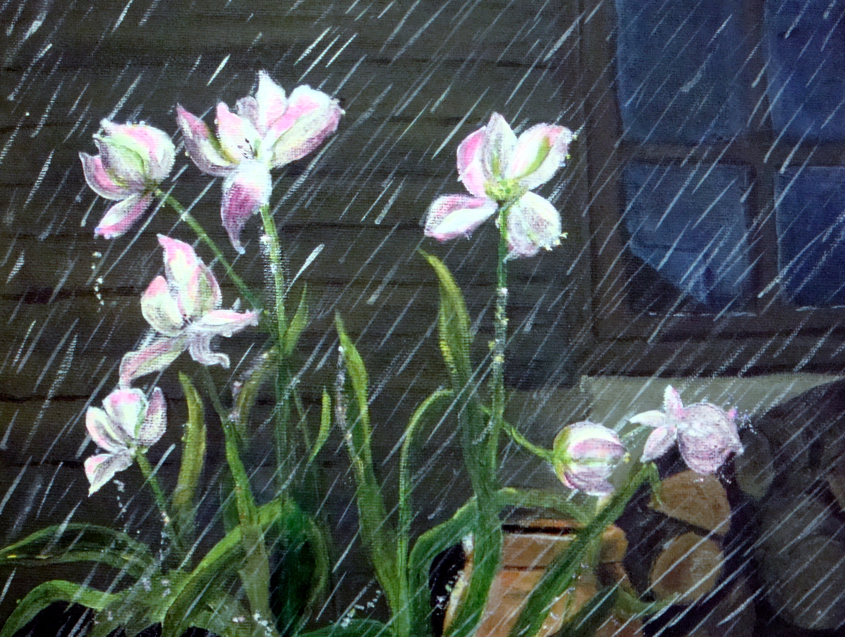 Flowers In The Rain Wallpapers High Quality Download Free