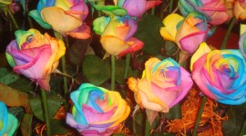 Flowers Of The Rainbow Photo Download