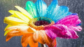 Flowers Of The Rainbow Wallpaper 1080p