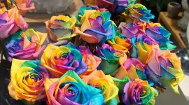 Flowers Of The Rainbow Wallpaper Full HD