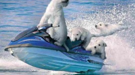 Funny Pictures About Water Photo Free