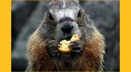 Groundhog Day Photo Free#1