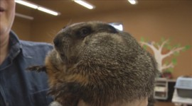 Groundhog Day Wallpaper 1080p