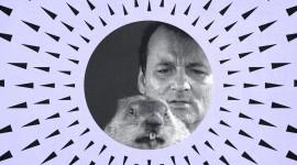 Groundhog Day Wallpaper For Desktop