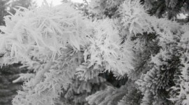 Hoarfrost Photo Download