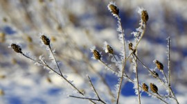 Hoarfrost Photo Download#1