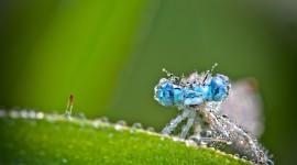 Insects In The Rain Desktop Wallpaper HD