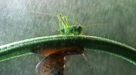 Insects In The Rain Photo