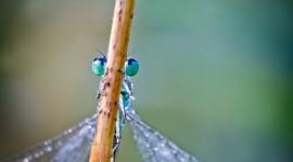 Insects In The Rain Photo Free