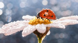 Insects In The Rain Wallpaper