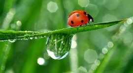 Insects In The Rain Wallpaper Download