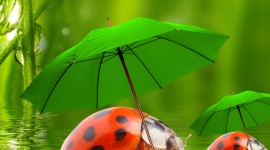 Insects In The Rain Wallpaper For Android
