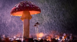 Mushrooms In The Rain Best Wallpaper