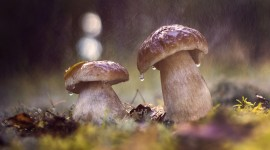 Mushrooms In The Rain Photo