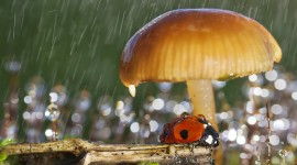 Mushrooms In The Rain Photo Download
