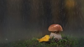 Mushrooms In The Rain Photo#2