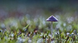 Mushrooms In The Rain Wallpaper 1080p