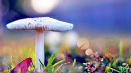Mushrooms In The Rain Wallpaper For PC