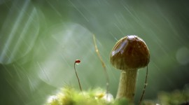 Mushrooms In The Rain Wallpaper Free