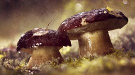 Mushrooms In The Rain Wallpaper Gallery