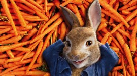 Peter Rabbit Movie Wallpaper Background