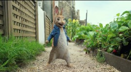 Peter Rabbit Movie Wallpaper Full HD