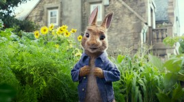 Peter Rabbit Movie Wallpaper HQ