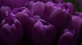 Purple Flowers Best Wallpaper