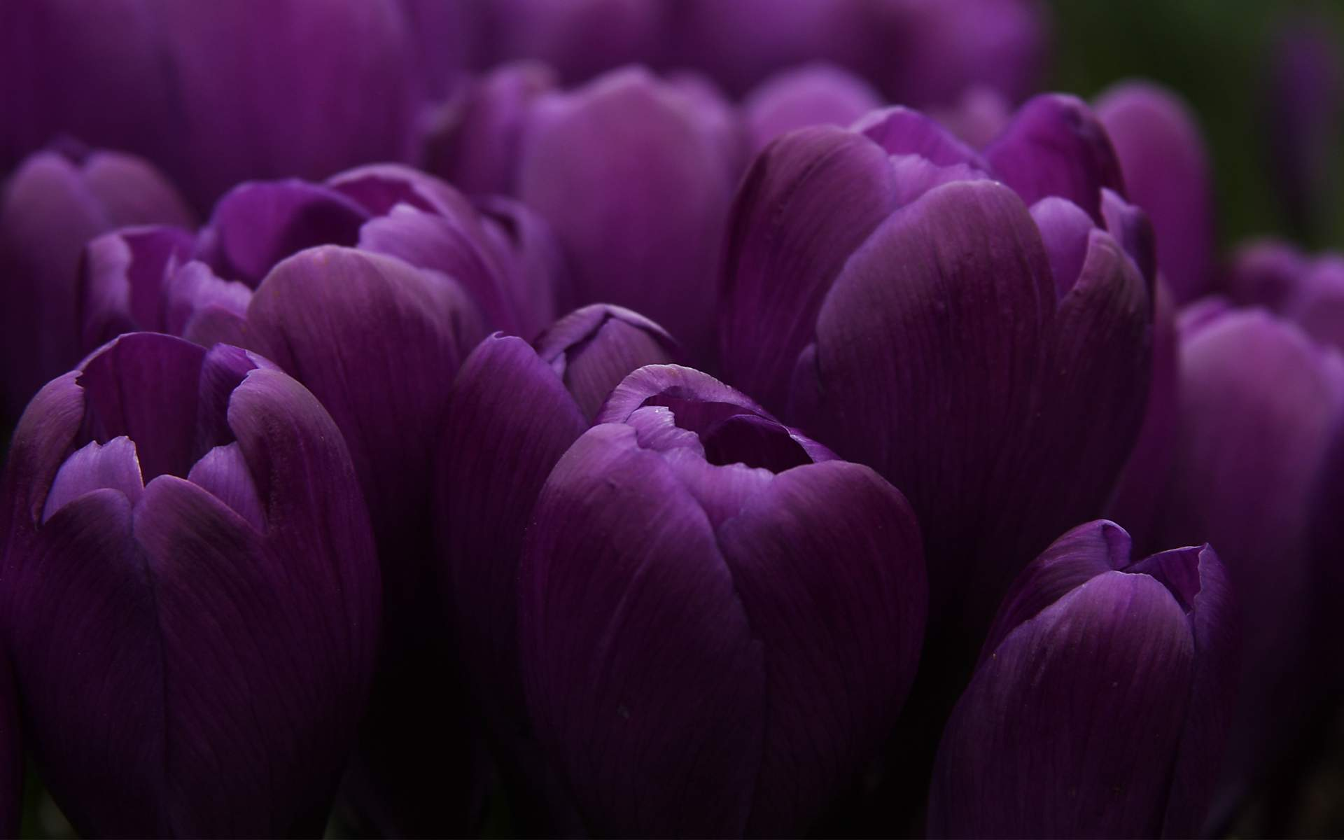 Purple flowers wallpapers high quality download free purple flowers wallpapers mightylinksfo