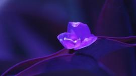 Purple Flowers High Quality Wallpaper