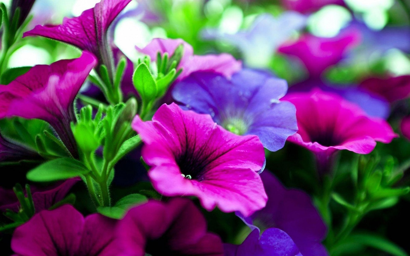 Purple Flowers Wallpapers High Quality Download Free