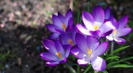 Purple Flowers Wallpaper Background