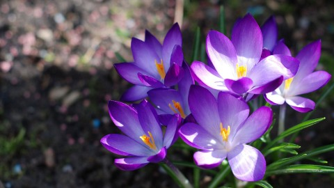 Purple Flowers wallpapers high quality