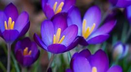 Purple Flowers Wallpaper Download Free