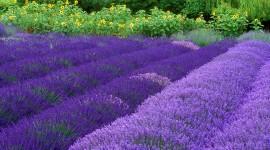 Purple Flowers Wallpaper For Desktop