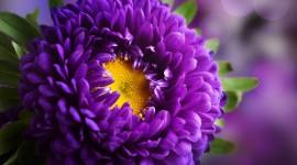 Purple Flowers Wallpaper For PC