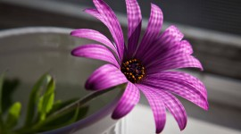 Purple Flowers Wallpaper Free