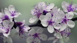 Purple Flowers Wallpaper Full HD