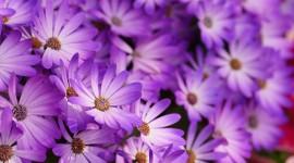 Purple Flowers Wallpaper HD