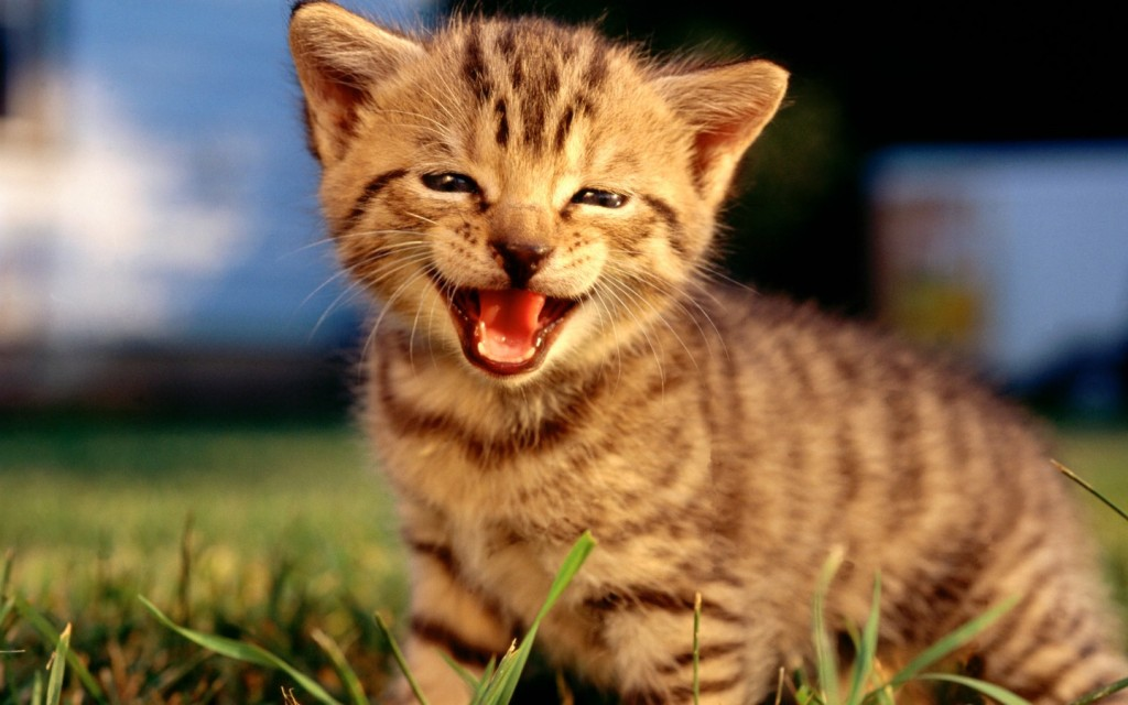 Smiling Cats wallpapers HD