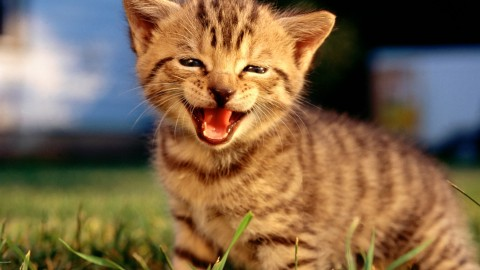 Smiling Cats wallpapers high quality