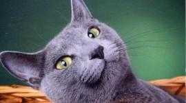 Smiling Cats Desktop Wallpaper
