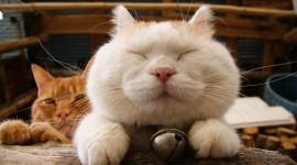 Smiling Cats Desktop Wallpaper For PC