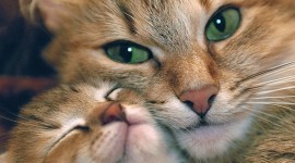 Smiling Cats Photo